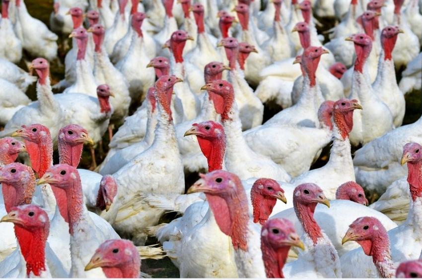 МАСОВИ ПРОВЕРКИ в птицефермите в страната заради риска от болестта Инфлуенца